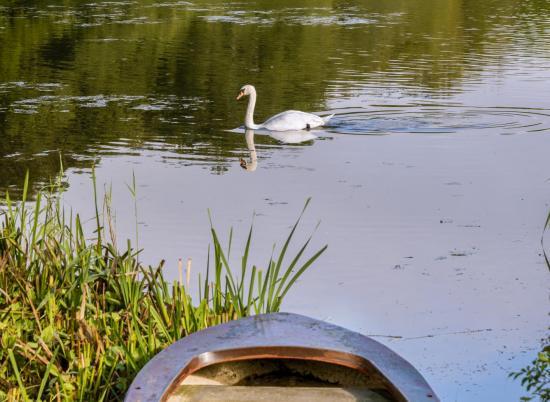 Pearl Lake morning photo