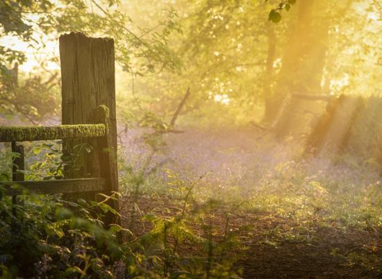 Spring woodland morning near Pearl Lake and Arrow Bank photo