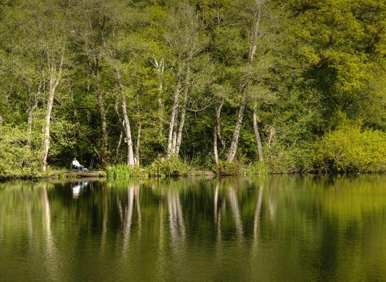 Peaceful fishing at Pearl Lake. Woodland Peg