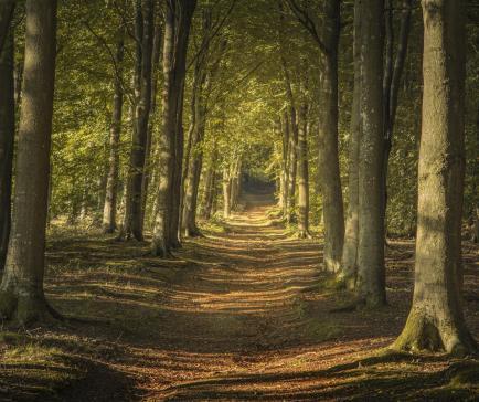 Beautiful local woodland walks at Wapley Hill Fort