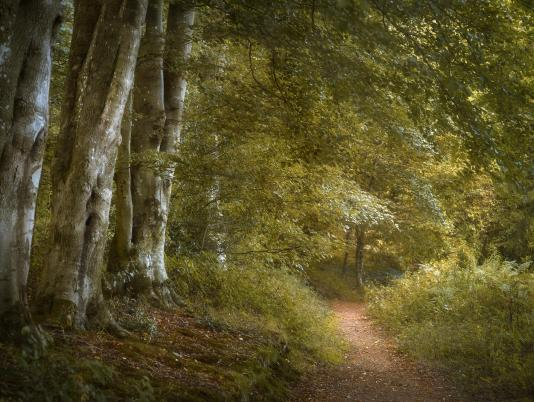 Wapley Hill Fort woodland walks