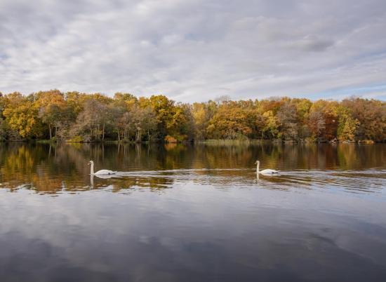 Calm autumn morning at Pearl Lake