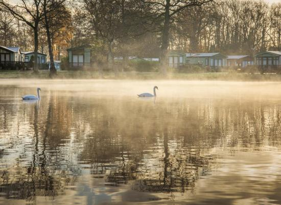 Swans in winter morning mist at Pearl Lake photo