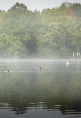 Mist on the lake - October morning at Pearl Lake photo