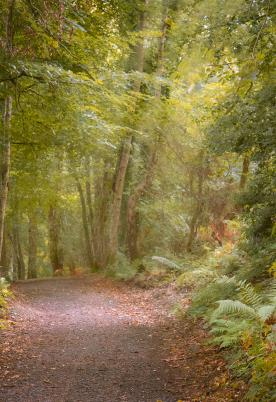 5 star caravan park with woodland walks