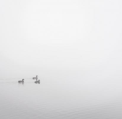 Ducks in the mist at Pearl lake - photo