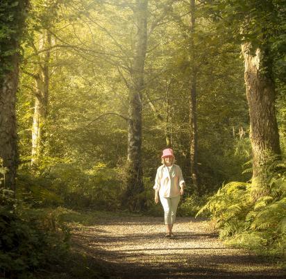 woodland walking photo