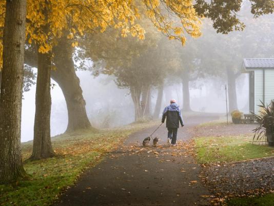 Misty morning dog walk at Pearl Lake photo